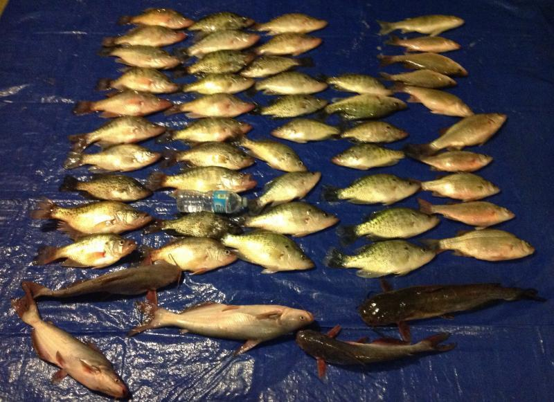 Lake waco today crappie fishing texas fishing forum for Lake waco fishing report