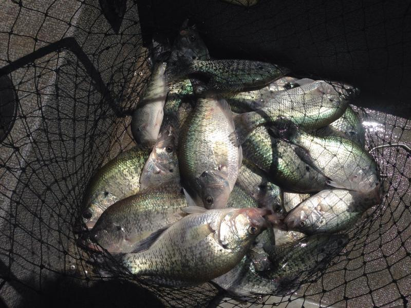 Lake lavon fishing guide report for Crappie fishing in texas