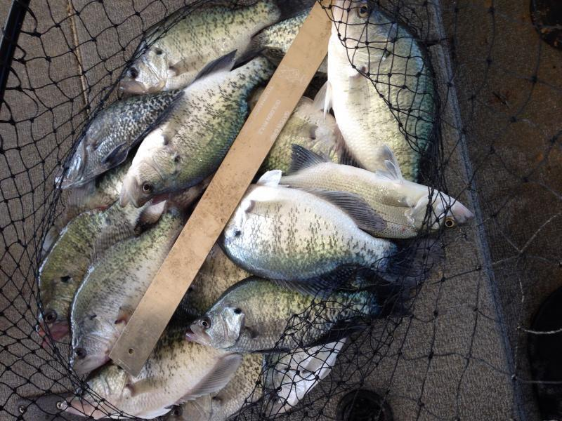 Lake lavon fishing guide report page 2 for Lake lavon fishing