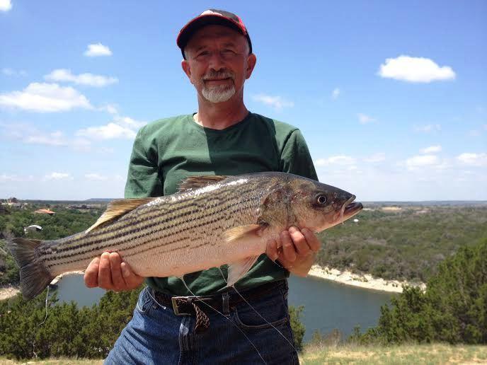 Barramundi stocking in texas open freshwater for Fish stocking texas