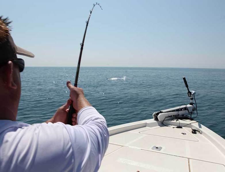 Bass champs president on tarpon and shark bass fishing for 13 fishing tx