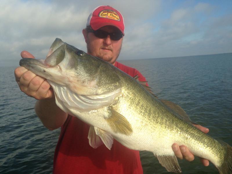 Falcon lake bass fishing texas fishing forum for Falcon lake fishing