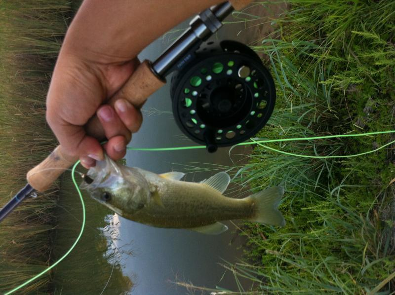Fly fishing waco tx fly fishing texas fishing forum for Fly fishing forum