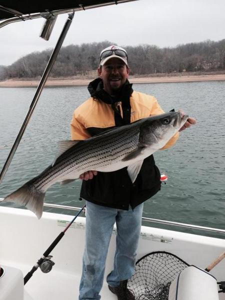 My trip to beaver lake arkansas whites hybrids for Beaver lake striper fishing