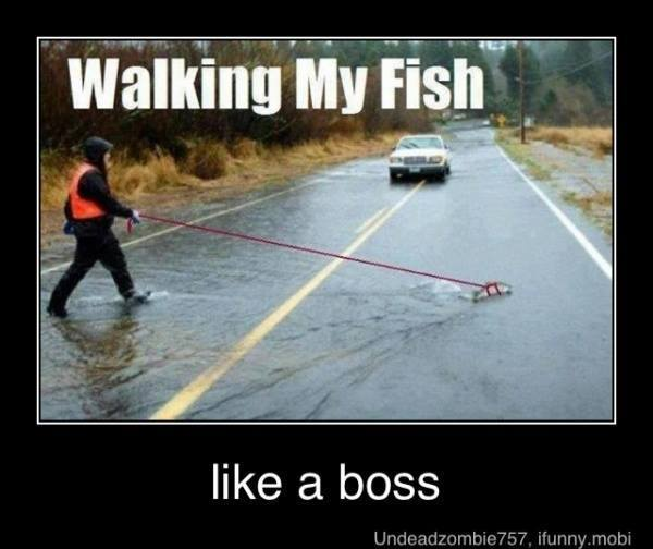 Funny fishing memes bass fishing texas fishing forum for Crazy fishing videos