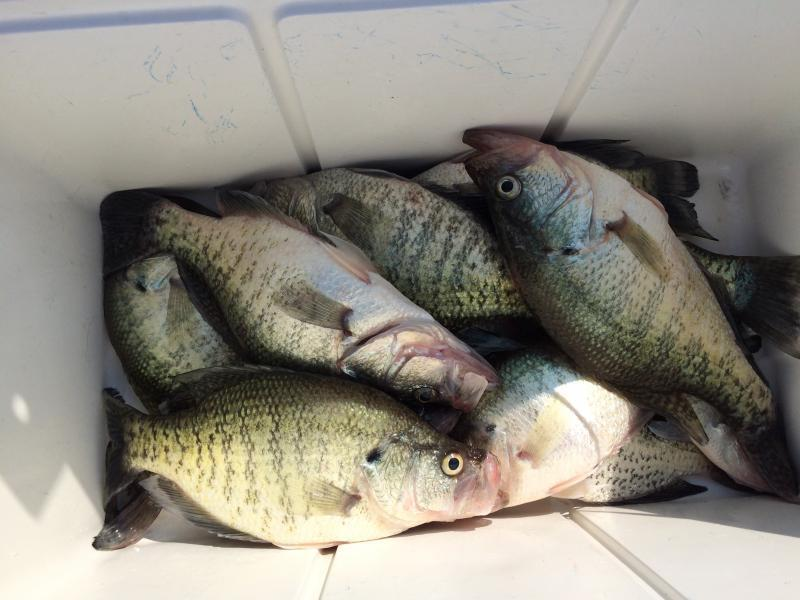 Lake fork report update pictures crappie fishing for Crappie fishing texas