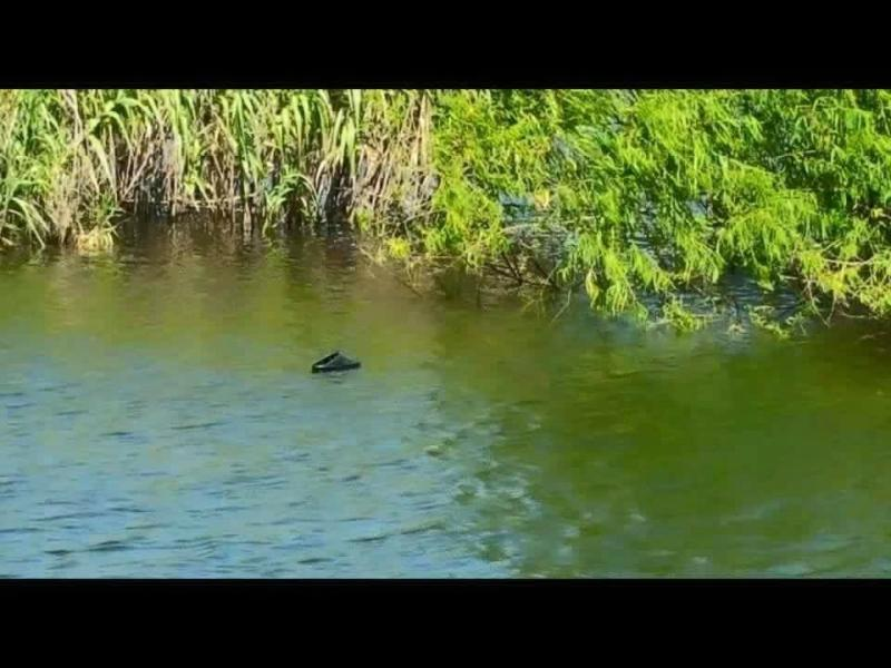 Croc spotted today on ray roberts open freshwater for Lake ray roberts fishing