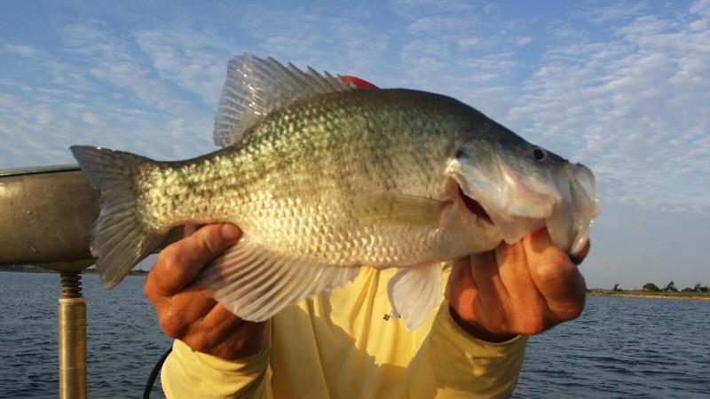 Lake lavon is hot crappie fishing texas fishing forum for Lake lavon fishing