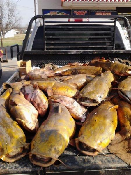 Limit of crappie crappie fishing texas fishing forum for Texas fish size limits