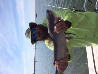 Fall lavon trophy catfish trips catfishing texas for Lake lavon fishing