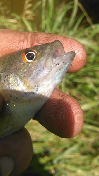 Black spots on small cats still edible or throw them back for Edible freshwater fish