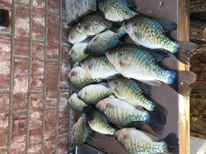Great day on lavon crappie fishing texas fishing forum for Crappie fishing texas
