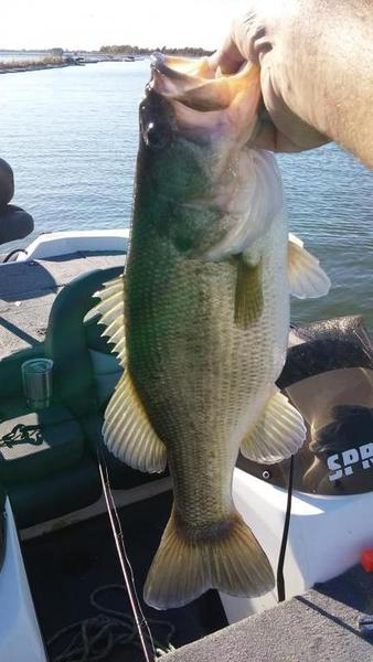Best lake in dfw right now bass fishing texas for Best bass fishing lakes in texas