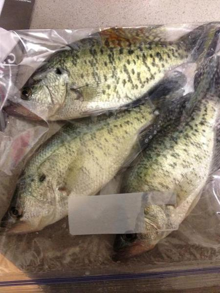 Creek crappie chronicles bank fishing texas fishing for How to fish for crappie from the bank