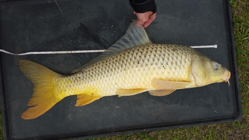 Windy white caps carp fishing denton rough fish carp for White cap fish