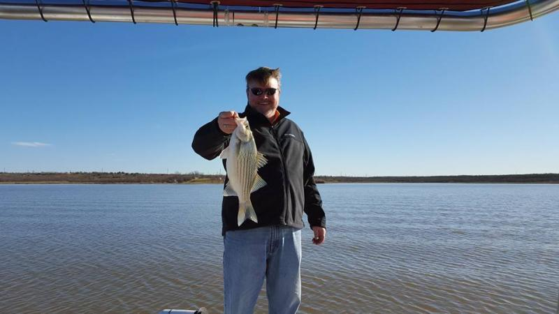 Troll on at lake fort phantom hill whites hybrids for Texas non game fish