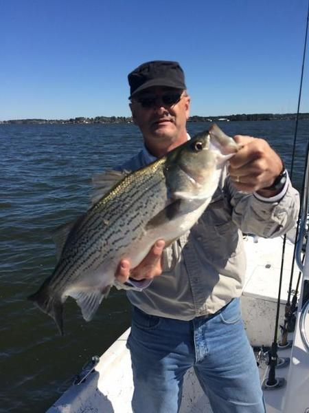 Lake livingston adventures guide report hybrid bonanza for Lake livingston fishing report