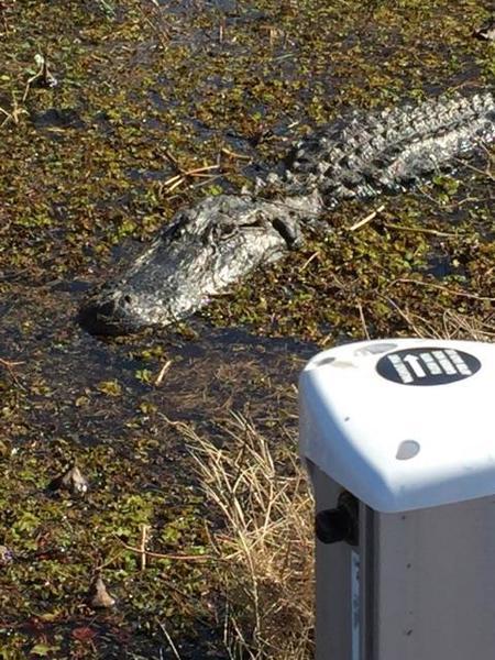 Sheldon lake 01 20 16 fishing report freshwater reports for Sheldon lake fishing