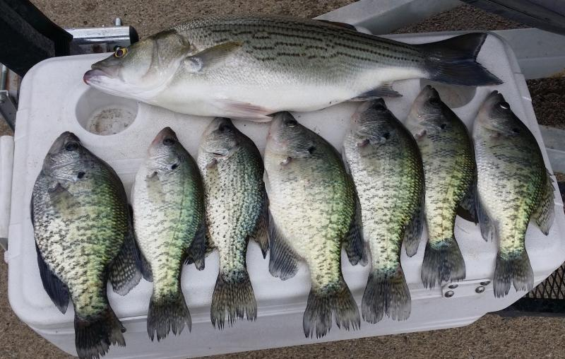 Lewisville 5 15 16 crappie fishing texas fishing forum for Crappie fishing texas