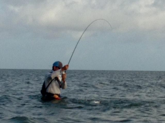 Wade fishing the past couple days seadrift tx inshore for 13 fishing tx