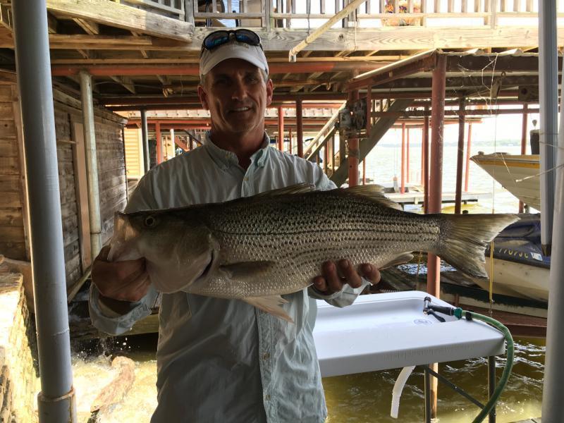 Lake granbury whites hybrids striper texas fishing for Lake granbury fishing