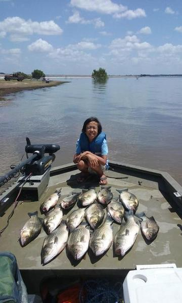 Lake somerville sunday 8 7 report whites hybrids for Lake houston fishing report