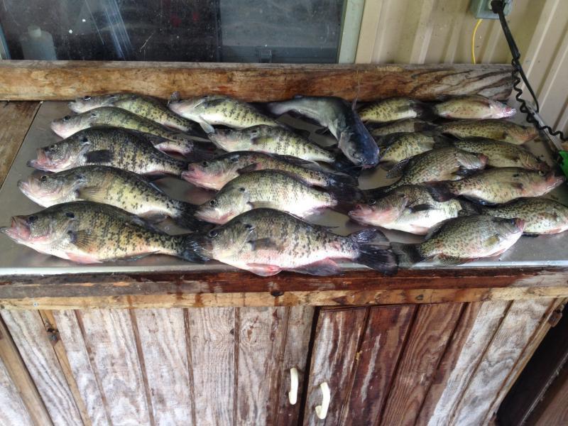 Lop report crappie fishing texas fishing forum for Crappie fishing in texas