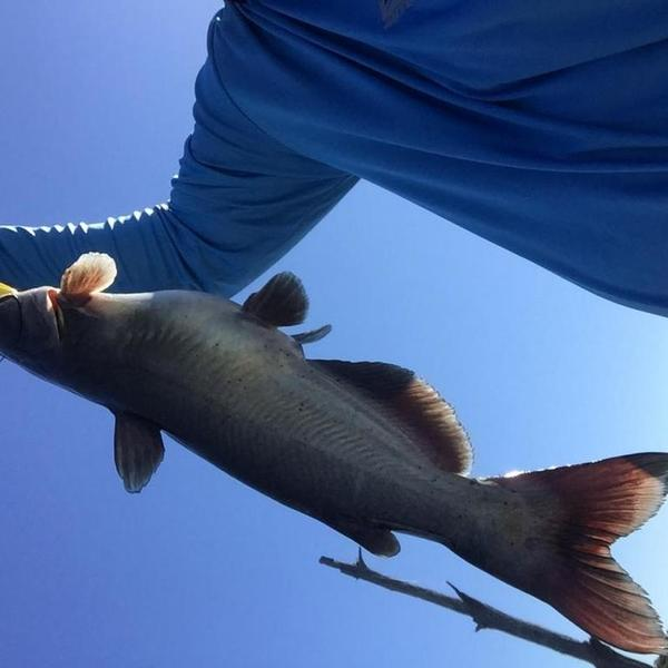 Slow bite on fork today catfishing texas fishing forum for Are fish biting today