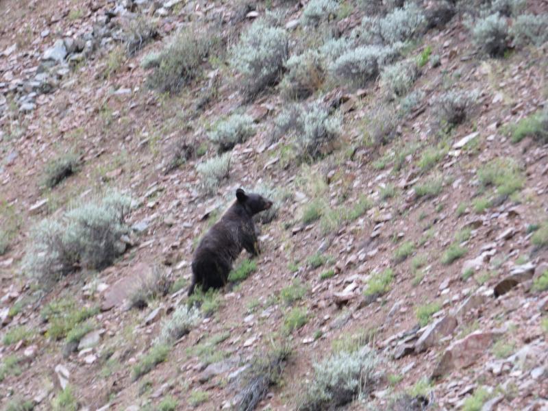 Colorado wildlife on fly fishing adventure fly fishing for Colorado fish and wildlife