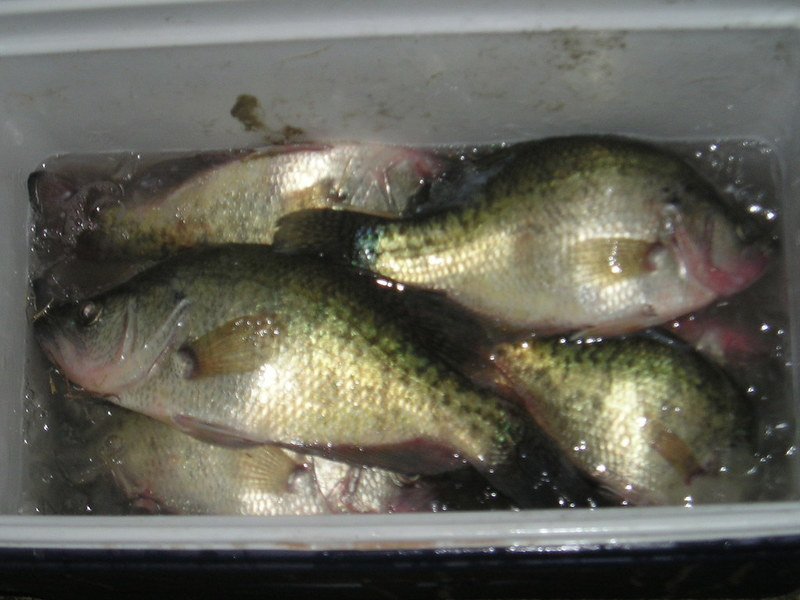 Interesting morning on good ole belton crappie fishing for Crappie fishing texas
