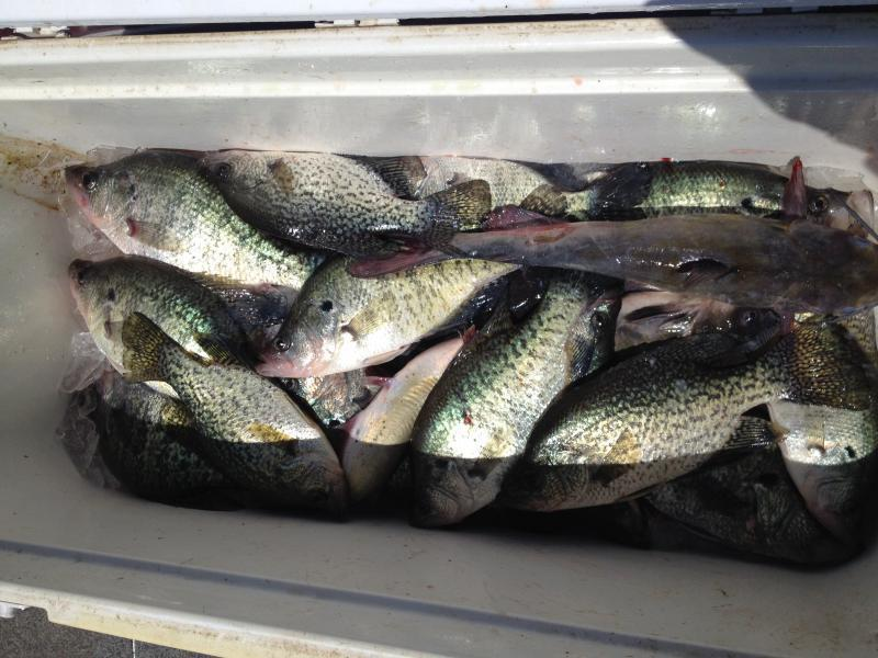 Lake fork crappie fishing crappie fishing texas for Best crappie fishing times