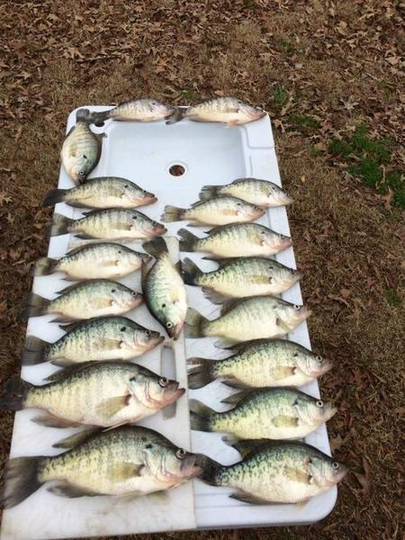 Spider rigging on lake fork crappie fishing texas for Spider rigs for crappie fishing
