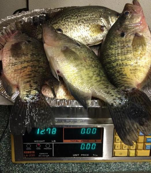 Crappie fishing off topic texas fishing forum for Crappie fishing texas