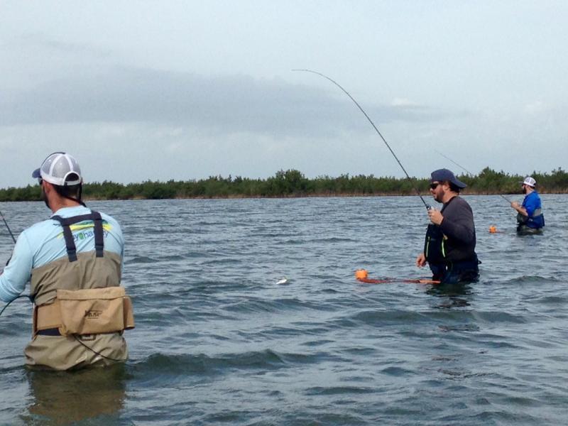 3 day wade fishing report seadrift tx 1 16 17 inshore for Tx fishing report