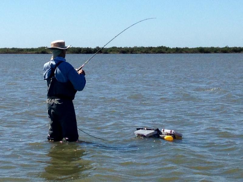 Seadrift tx wade fishing report 2 23 17 inshore for Tx fishing report