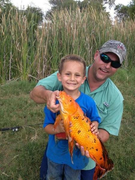 Petco gold fish rough fish carp texas fishing forum for Petco koi fish
