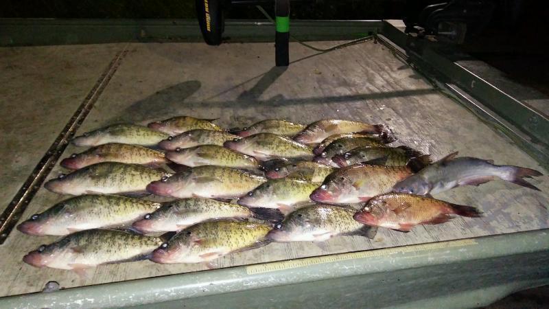 Choke canyon crappie crappie fishing texas fishing forum for Crappie fishing at night