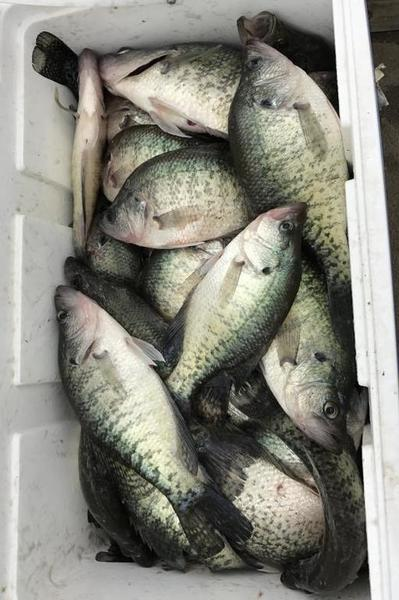 Lake fork crappie 5 10 17 crappie fishing texas for Crappie fishing in texas