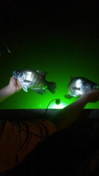 Naconiche At Night Crappie Fishing Texas Fishing Forum