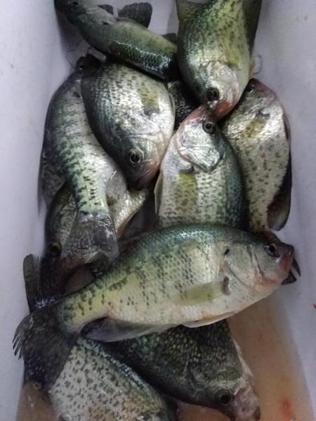 Night Fishing Lake Travis Crappie Fishing Texas