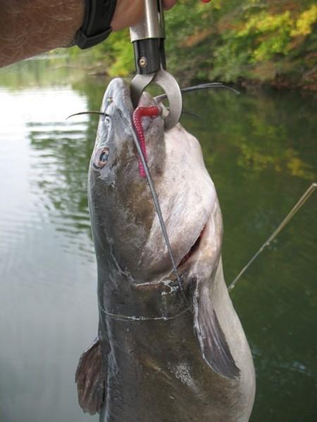 Multi Species Lures Soft Plastics Open Freshwater