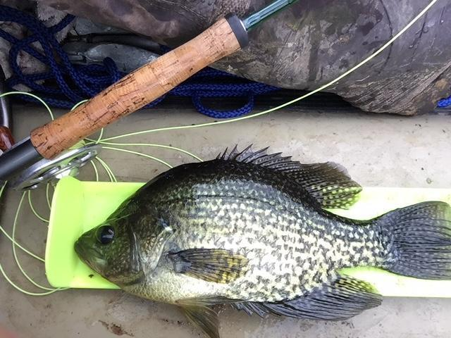Lake somerville bank fishing texas fishing forum for How to fish for crappie from the bank